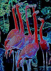 Flamingos - ArtistMichaelTodd