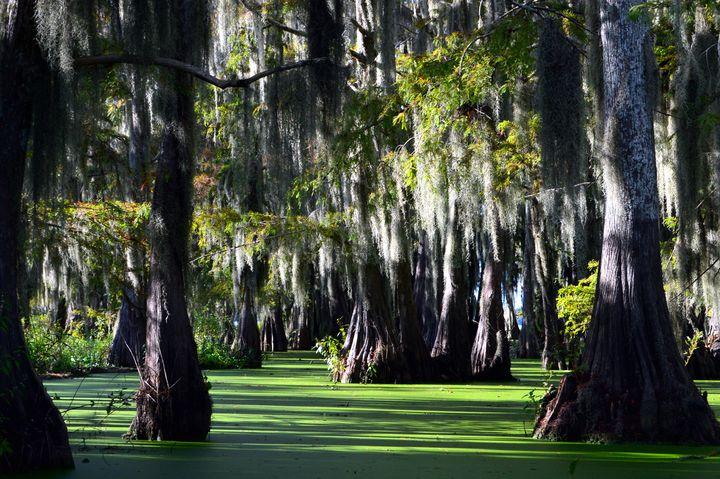 Swamp Life - Alexis Patten