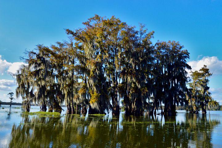 Center Swamp - Alexis Patten