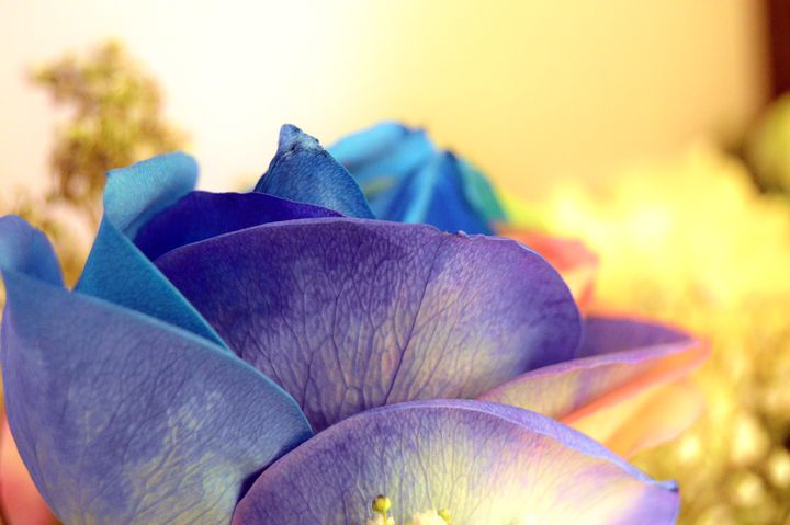 Colorful Days - Alexis Patten