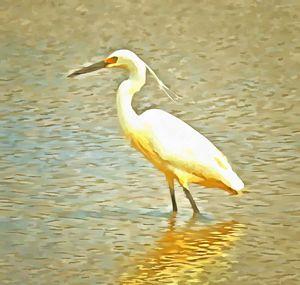 Egret - ant36au