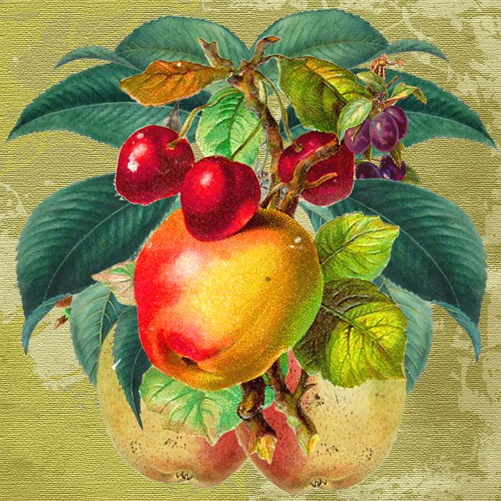Vintage Fruit - ant36au