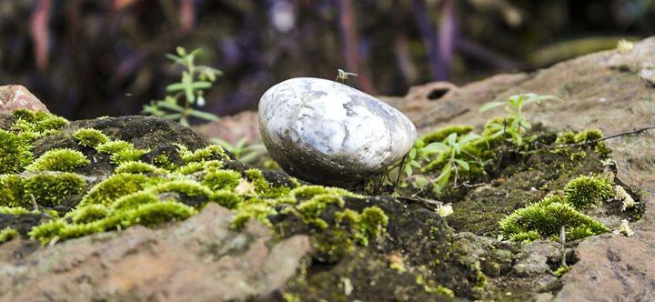 Bug On A Rock - ant36au
