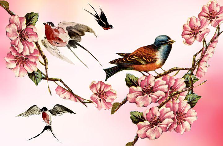 Vintage Birds - ant36au