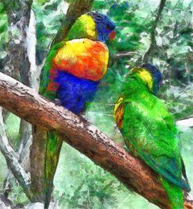 Australian Parakeets - ant36au