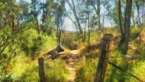 Bush Track