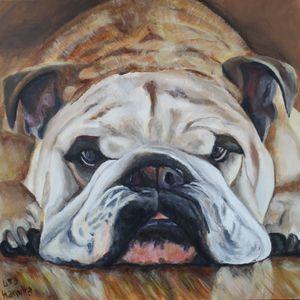 Bulldog on Hardwood