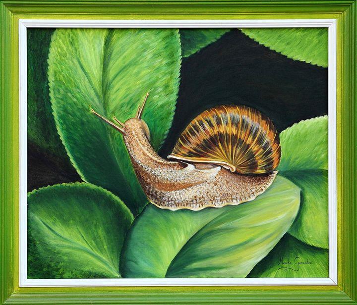 Caracol - Megon Art