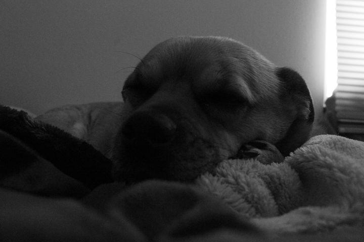 Tired dog - KC Photography