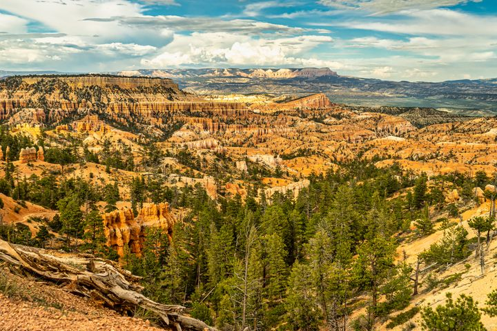 Overlooking Bryce Canyon Valley - Joie Cameron-Brown Photography