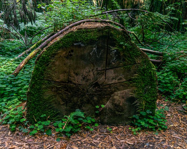 History In The Forest - Joie Cameron-Brown Photography