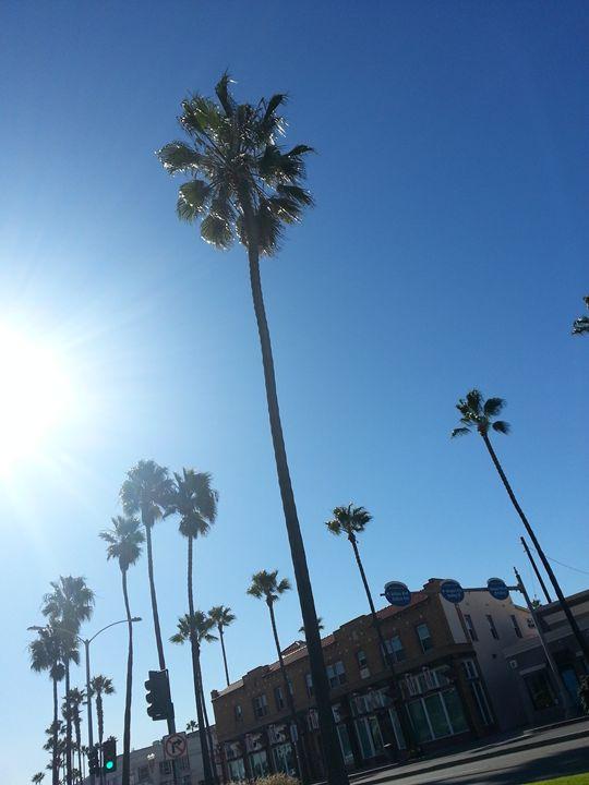 Cali palms - pace photography