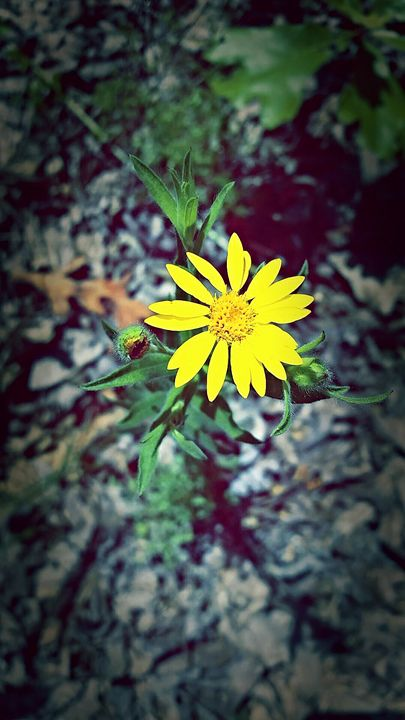 yellow flower - pace photography