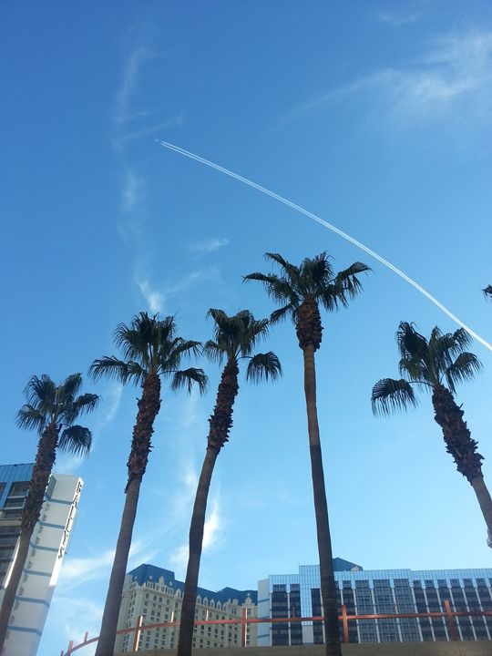 Vegas Palms - pace photography