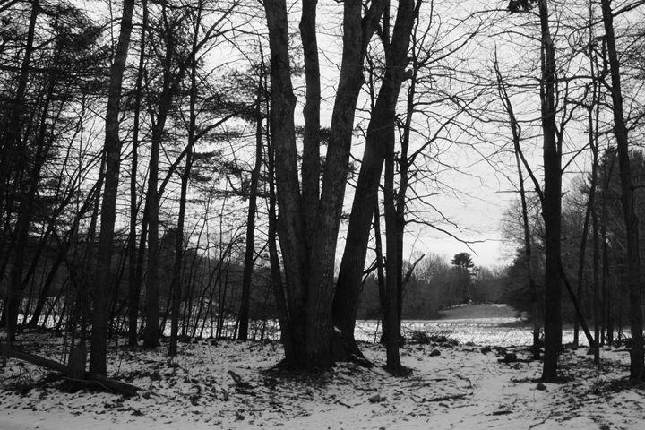 Opening to Winter Field (BW) - MBenton Studios