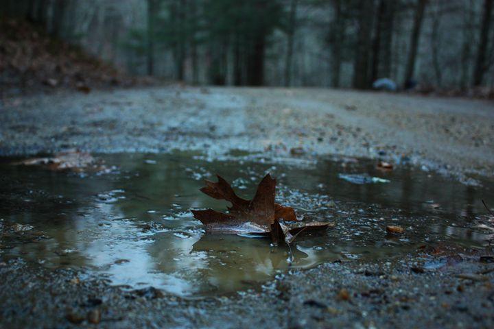 Leaf in Puddle - MBenton Studios