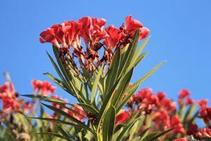 A Flowering Fan