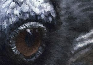 Eye of the Raven