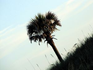 One Palm Tree