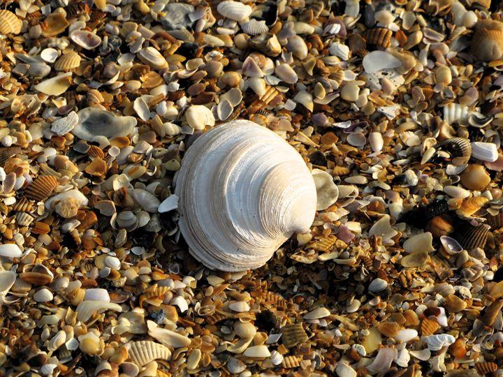 Seashells by the Seashore - DesginMyKind