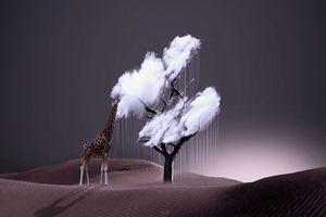 Le parfum des nuages - CF