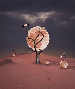 Le ramassage de lunes - CF