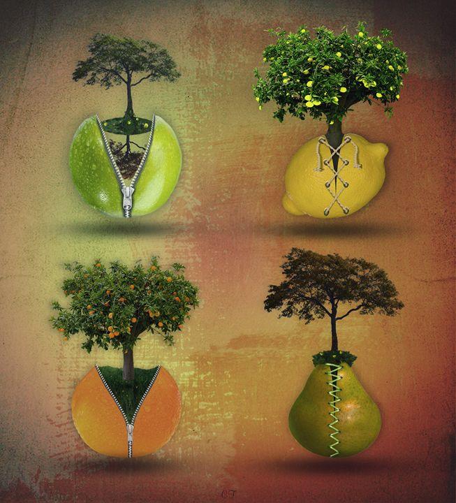 les 4 fruits - CF