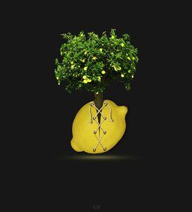 le citron lacet