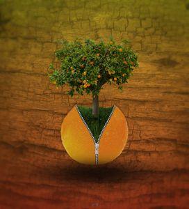 l'oranger zippé 2