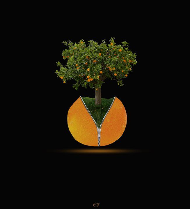 l'oranger zippé - CF