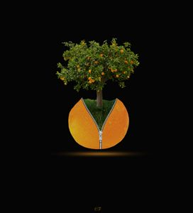 l'oranger zippé