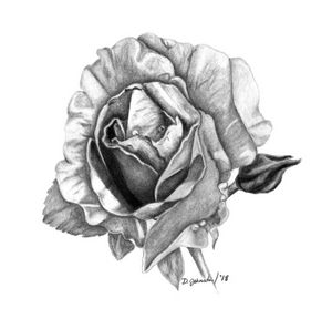 Rose in Charcoal