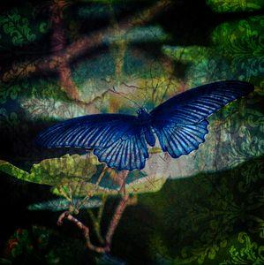 Blue Butterfly - Lynn Murphy