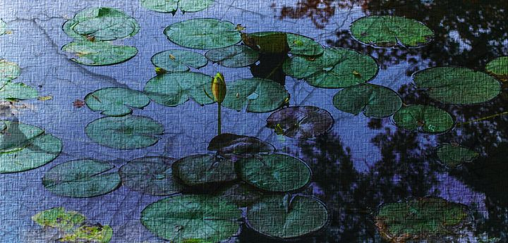 Waterlilies - Lynn Murphy