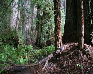 Jedediah Smith Forest