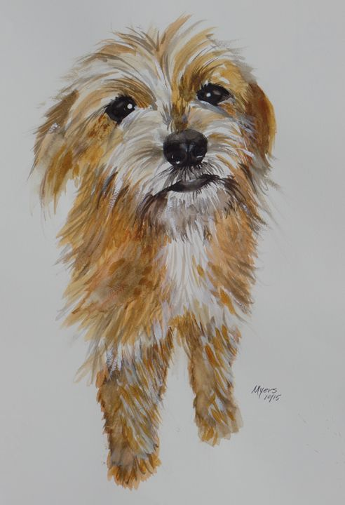 Brussels Griffon Poodle Mix - David K. Myers Watercolor/ Photo Gallery