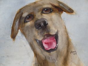 Shelter Dog 1, Original Watercolor - David K. Myers Watercolor/ Photo Gallery