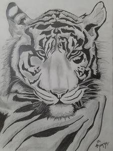 The realistic tiger sketch!!