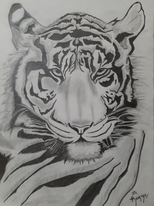 The realistic tiger sketch!! - Classy Keetz!!