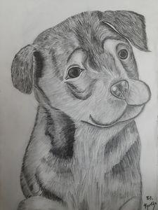 The cute puppy!!