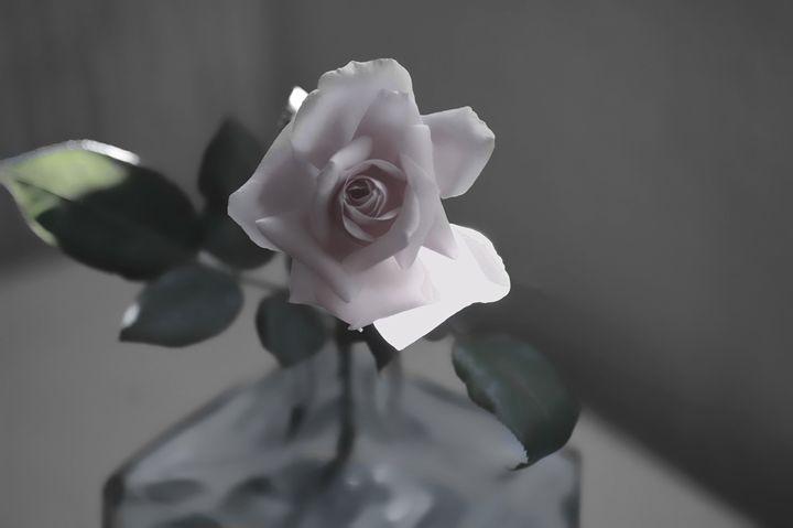 Rose - MaXx Art