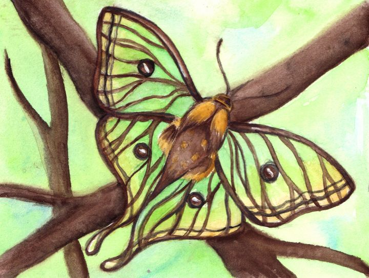 Luna Moth - RowanMakesArt