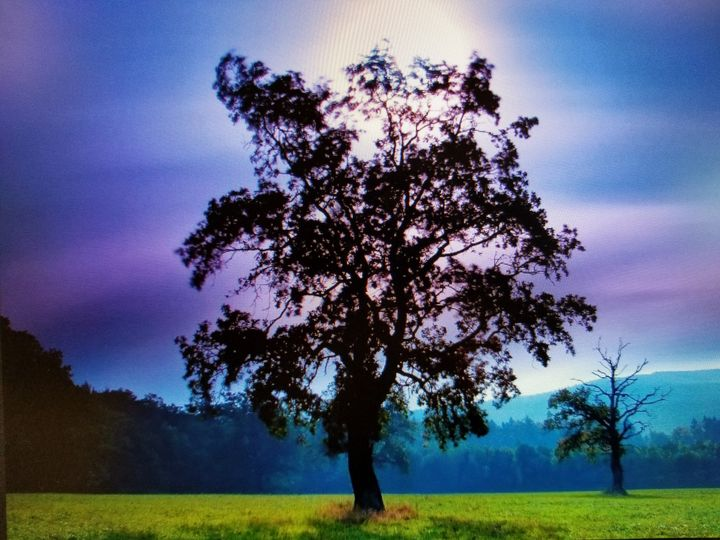 Tree Aglow - Mario