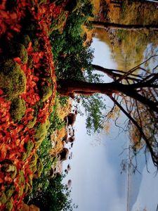 Autumn Magic - Mario