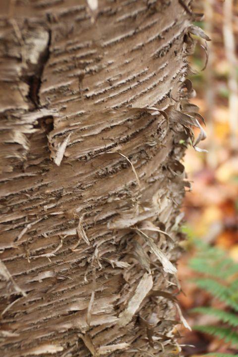 Wood Bark - Jessica Roberto
