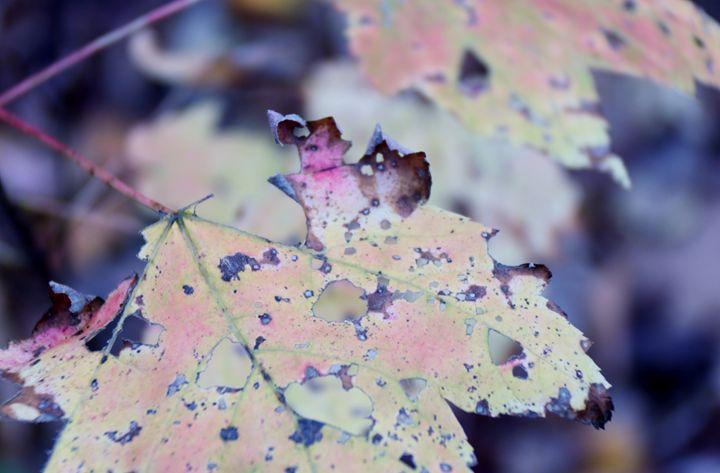 Leaf 1 - Jessica Roberto