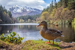 Glencoe - Scottish Wildlife - Pete Diako