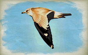 Ring-billed Gull at Arthur Kill