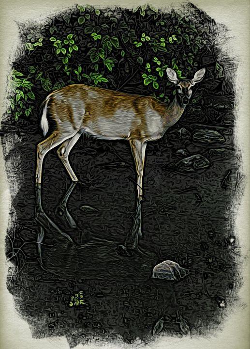 Deer at Kingston - Richmanphotoart.com
