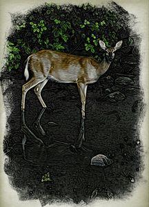Deer at Kingston